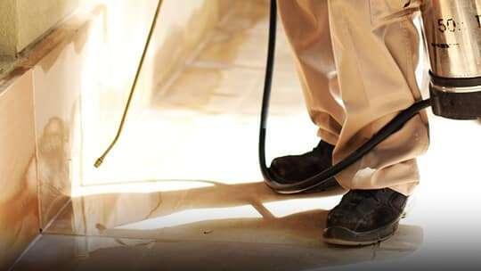اسعار شركة مكافحة حشرات بالدمام