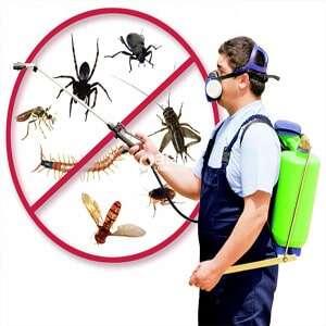 pest control in 300